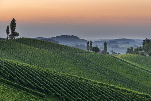 Austria, Styria, vine route, vineyard at sunset - MKFF000245