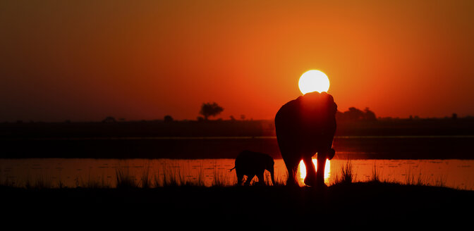 Botswana, Elefant with young animal on Chobe river at sunset - MPAF000018