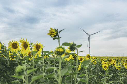 Sunflower field and wind farm - ASCF000262