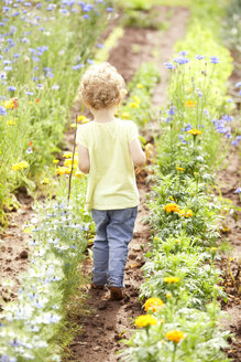 Back view of little girl walking through flower beds - MFRF000326
