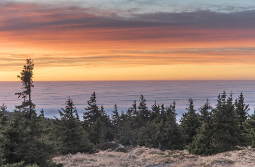Germany, Saxony-Anhalt, Harz National Park, atmospheric inversion at Brocken in the morning - PVCF000512