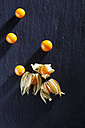 Physalis on slate - CSF025969