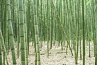 Japan, Arashiyama, bamboo forest - FLF001204