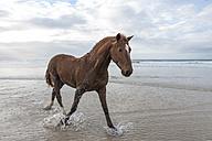 Brown horse on a beach - ZEF006429