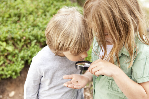 Boy and girl looking through magnifying glass on beetle - MFRF000275