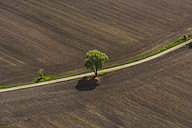 Germany, Bavaria, Dachau district, Plowed fields with single tree - PEDF000108