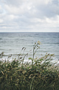 Germany, Nienhagen, grass in front of the sea - ASC000274
