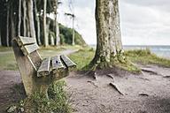 Germany, Nienhagen, wooden bench in front of Gespensterwald - ASCF000280
