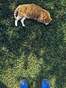 Lazy red cat, Desenzano, Italy - FL001171