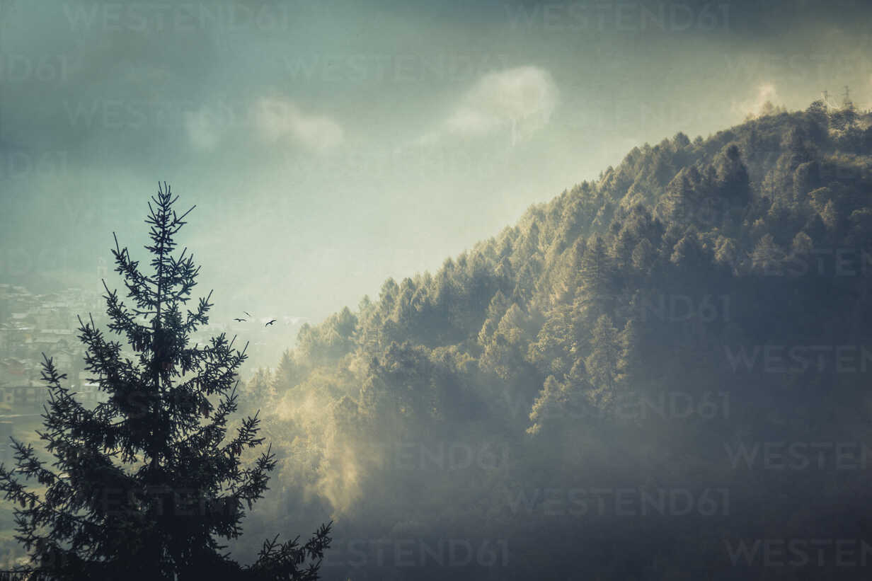 Morning fog at sunset over forest, digitally manipulated - DWIF000560 - Dirk Wüstenhagen/Westend61