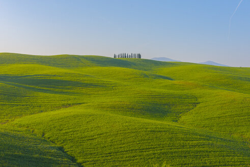 Italy, Tuscany, Val d'Orcia, view to rolling landscape - LOMF000031