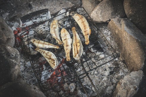 Grilling fish on camp fire - DEGF000504