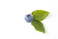 Blueberry with leaves on white ground - CSF026145