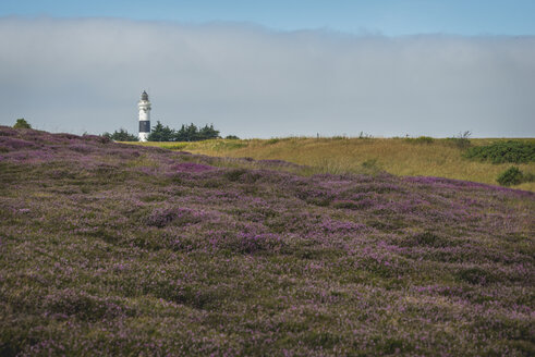 Germany, Sylt, Kampen, view to light house with Braderup Heath in the foreground - KEBF000243