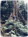 New Zealand, North Island, Te Urewera National Park, rainforest, Native Bush, woman embracing huge old tree - GWF004391