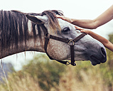 Hands of woman and little girl stroking horse - MGOF000463