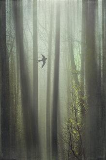 Flying bird, forest, digitally manipulated - DWI000567