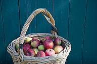 Wicker basket of Jakob Fischer apples in front of wooden wall - GISF000137