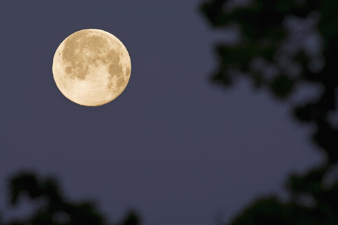 Germany, full moon in the morning - UMF000785