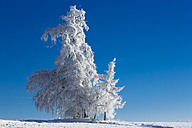 Germany, Bavaria, trees in winter - MAEF010977