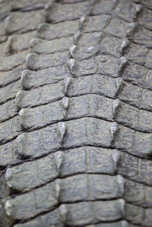 Crocodile skin, close-up - ERLF000015
