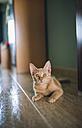 Portrait of kitten lying on the floor - RAEF000353