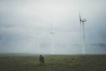 Spain, Ortigueira, row of wind turbines on a foggy day with horse on pasture in the foreground - RAEF000362