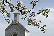Apple blossom in front of rural church - CRF002709
