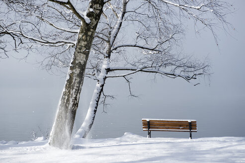 Germany, Bavaria, Lake Kochel, wooden bench on lakeshore, foggy and thaw - CRF002714