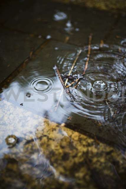 Spain, Water drops on a rainy day - RAEF000406