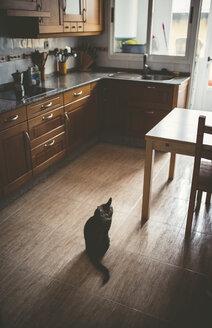 Tabby cat sitting on kitchen floor - RAEF000441