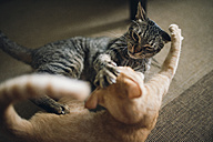 Two tabby cats play fighting in appartment - RAEF000444