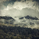 Italy, Lombardy, View to forest in morning mist, flying bird, textured effect - DWIF000590