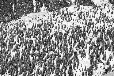 Austria, Tyrol, Ischgl, trees in winter landscape - ABF000654
