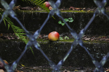 Apple lying on a moss-grown step - JTF000691