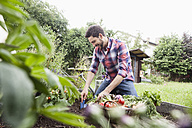 Man gardening in vegetable patch - RBF003137