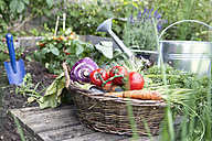 Basket full of organic vegetables - RBF003185