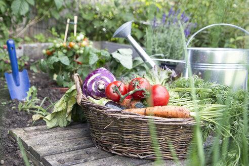 Basket full of organic vegetables - RBF003185