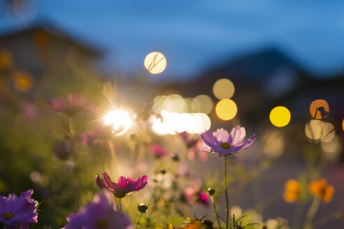 Germany, Bavaria, Roadside flower bed backlit by car headlight - FRF000332