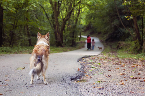 Spain, Girona, Abandoned dog standing on footpath watching people - XCF000025