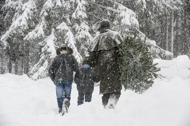Austria, Altenmarkt-Zauchensee, father with two sons carrying Christmas tree in winter landscape - HHF005370