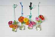 Laboratory glassware with common zinnia fixed with cords hanging on a wall - GISF000175