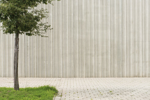Germany, Monchengladbach, Tree in front of concrete wall - VI000423
