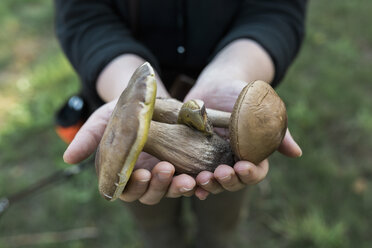 Woman's hands holding birch bolete and king bolete - ASCF000395