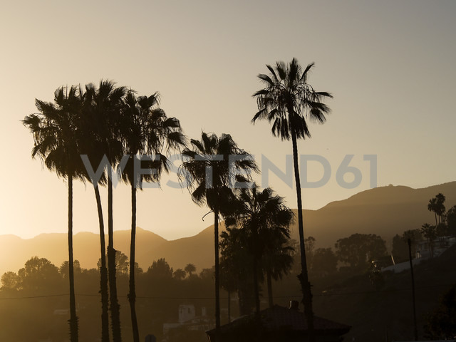 USA, Los Angeles, silhouettes of palms at evening twilight - SBDF002308 - Susan Brooks-Dammann/Westend61