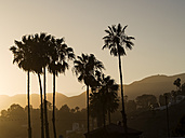 USA, Los Angeles, silhouettes of palms at evening twilight - SBDF002308
