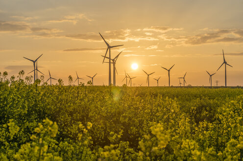 Wind farm and rape field at sunset - PVCF000710
