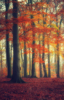 Autumn forest - DWIF000624