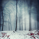 Foggy winter forest, digitally manipulated - DWIF000627