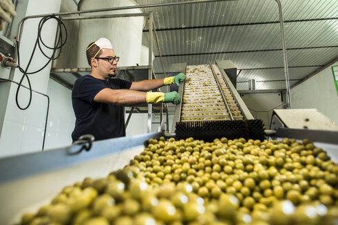 Worker in food processing plant at conveyor belt with olives - JASF000161